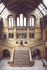 Natural History Museum Hall